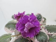 ЕК-Ярославль - цветущий куст