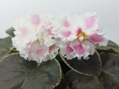 Розовая Акварель - детка
