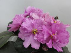 ЕК-Розовый Мрамор -  Детка
