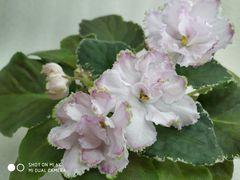 РС-Богиня Весны - цветущая