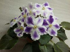 ВаТ-Надежда - цветущий куст