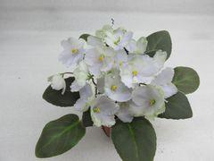 ЛЕ-Букет Незабудок - цветущий куст