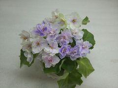 РС-Оазис -цветущий куст