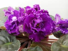 РМ-Византийская Роза