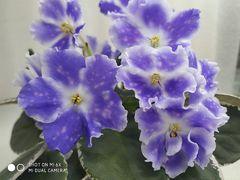 ВаТ-Утро - цветущий куст
